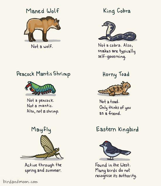 misleading-animals